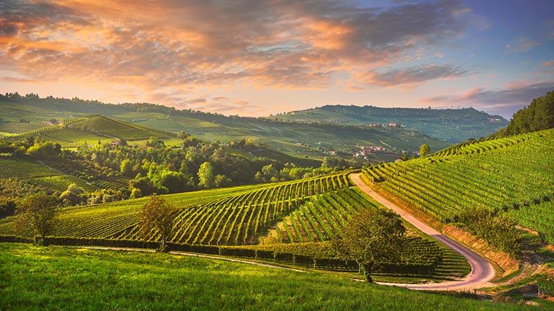 Tour delle Langhe con degustazione vini - Tour full day da Milano